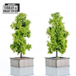 Planters with Trees