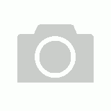 Starter Paint Brush Set