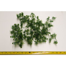 H11 Artificial Foliage - Bag