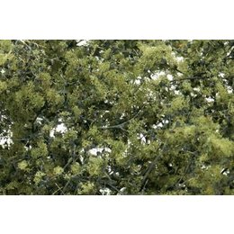 Olive Green Fine Leaf Foliage