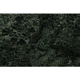 Dark Green Lichen